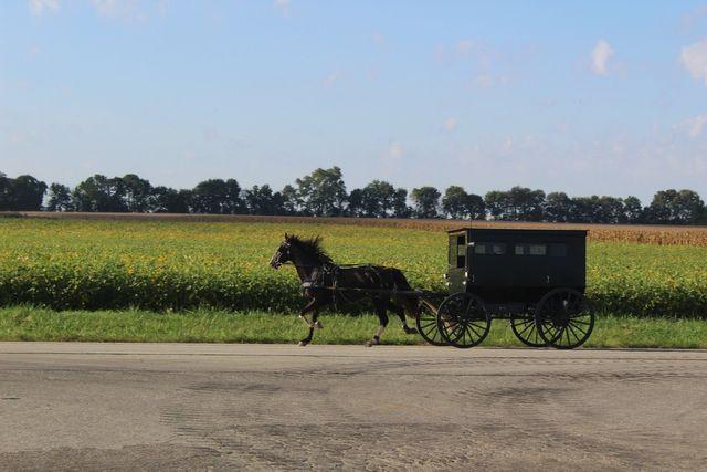 Amish Life Around Arcola Arcola Chamber Of Commerce Arcola Il