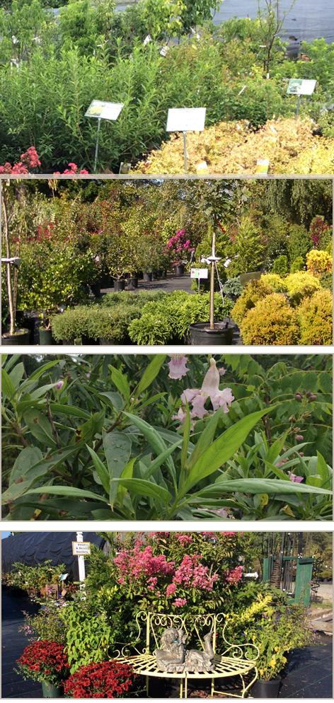 Plant Nursery Shrubs Centreville Md